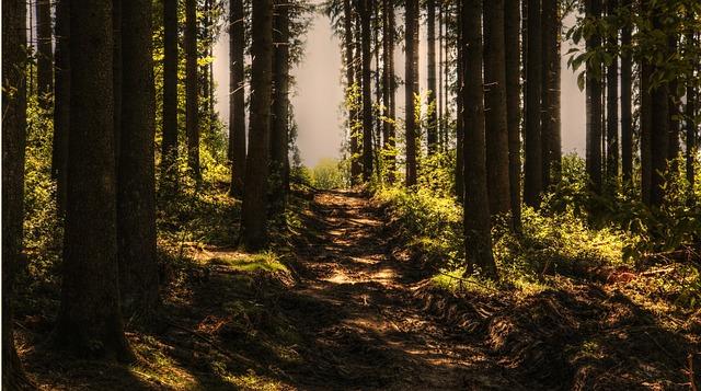 В Ростовской области в лесу подростки надругались над шестилетним мальчиком